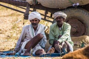 Camel owners taking a load off.
