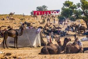 Spot the camels.