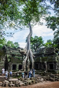 When nature takes over...Ta Prohm.