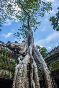 Beauty at Ta Prohm.