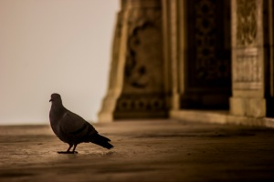 Hello, pigeon!