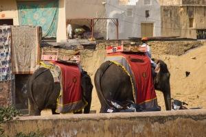 Elephant tours.